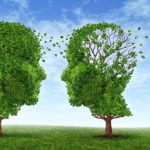 13325479 - living with alzheimers disease with two trees in the shape of a human head and brain as a symbol of the stress and effects on loved ones and caregivers by the loss of memory and cognitive intelligence function